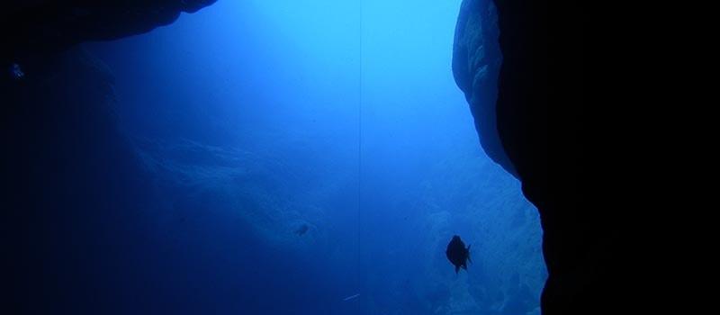 How Deep Can a Human Dive? Top 3 World-Record Dives